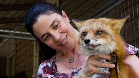 Cathy Horvath holds a fox named Rudy in