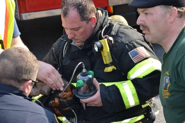 Selden Firefighter Doug Adamson gives a dog oxygen