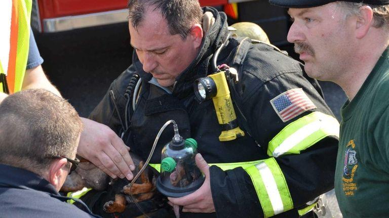 Selden Firefighter Doug Adamson gives a dog oxygen