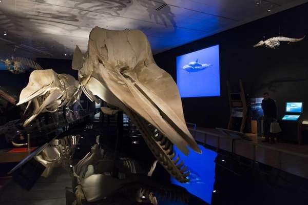People attend the press preview of quot;Whales: Giants