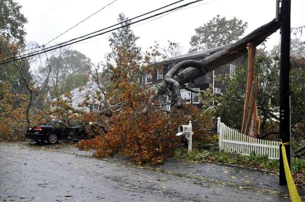 Sandy brings down a tree onto a car