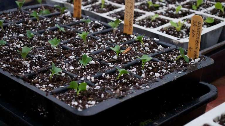 It's always best to water seedlings from the