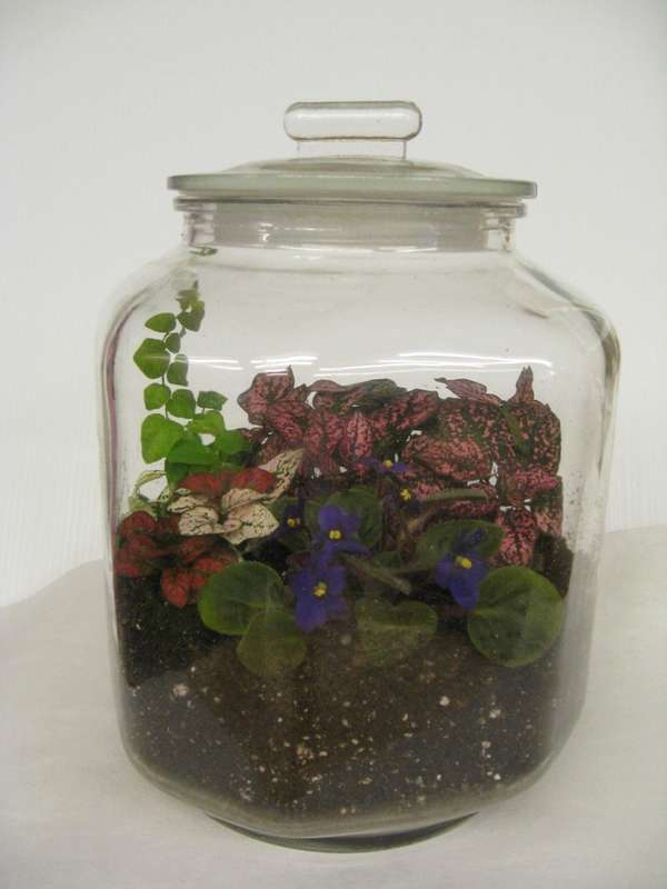 A terrarium makes is a great, homemade gift