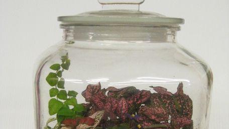 A terrarium makes is a great, homemade gift