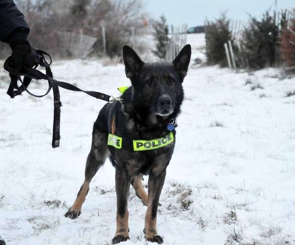 Police dog Blue is widely known for uncovering