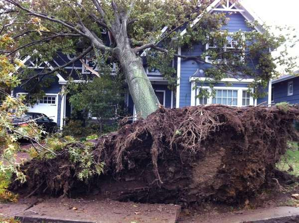 A tree falls over a house on Kildare