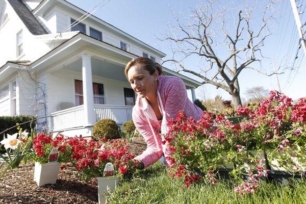 Debra Cox of Peconic plants diascia. (April 30,