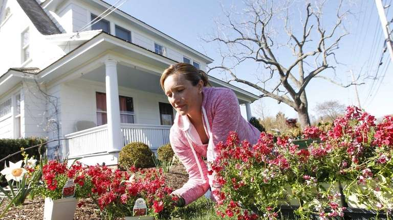 Debra Cox of Peconic plants diascia. (April 30,