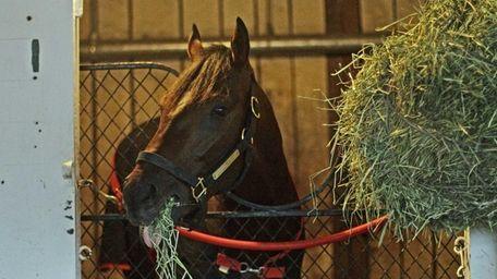 Kentucky Derby winner Orb munches on hay in