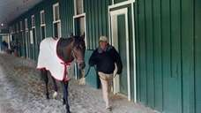 Trainer Shug McGaughey walks Kentucky Derby winner Orb