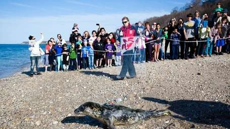 Sunny, a rescued seal adopted by kindergarten students