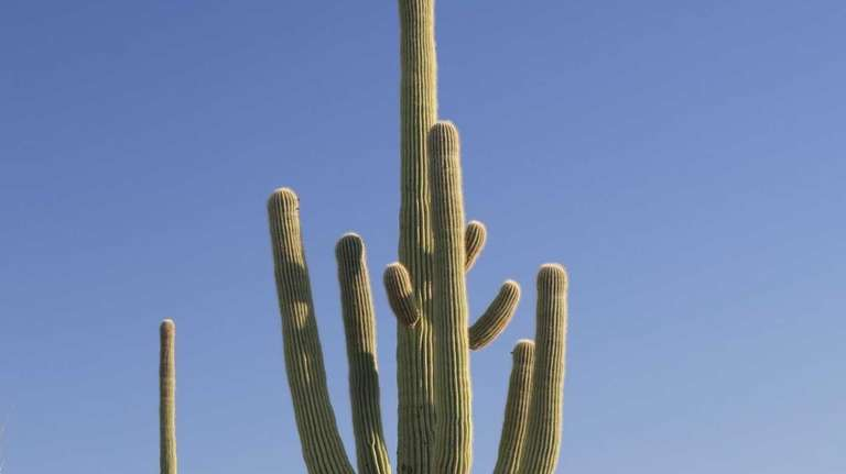 Former Long Islanders living in Arizona tell what