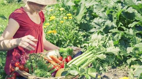 A woman gathering vegetables.