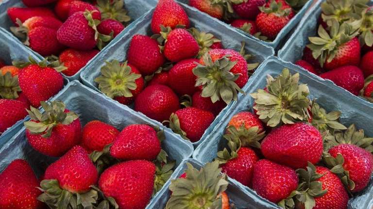 June is strawberry harvest time! (June 16, 2012)