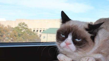 Grumpy Cat, real name Tardar Sauce, recently scored