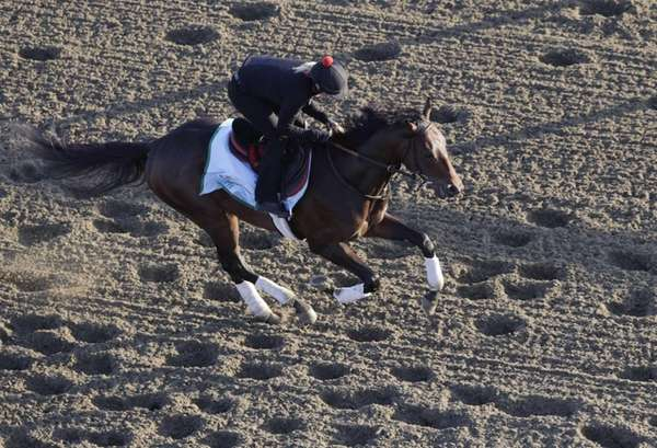 Kentucky Derby winner Orb gallops on the track