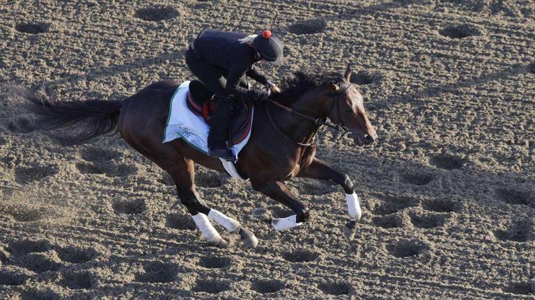 Kentucky Derby winner Orb gallops on the track