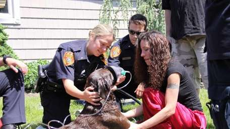 Firefighters were able to rescue a family's pet
