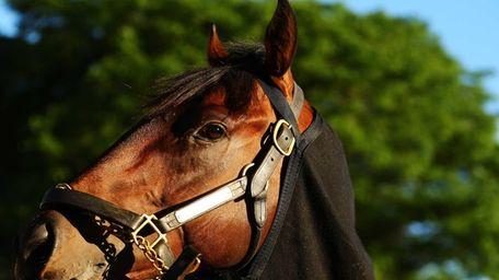 Kentucky Derby winner Orb is groomed after a