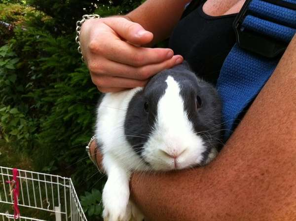 A pet rabbit relaxes after firefighters saved it