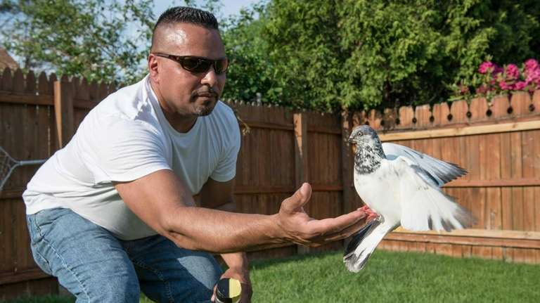 Pigeon fancier Ivan Torres, 44, of Farmingdale, hand-feeds