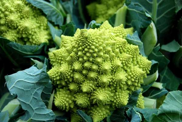 ROMANESCO: A veritable, edible work of art, the
