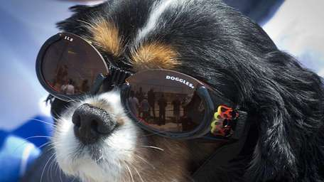Rupert looking Hollywood, sporting special sunglasses because he