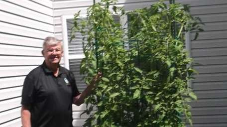 John Chanda grows tomatoes in a 4-foot-by-4-foot patch