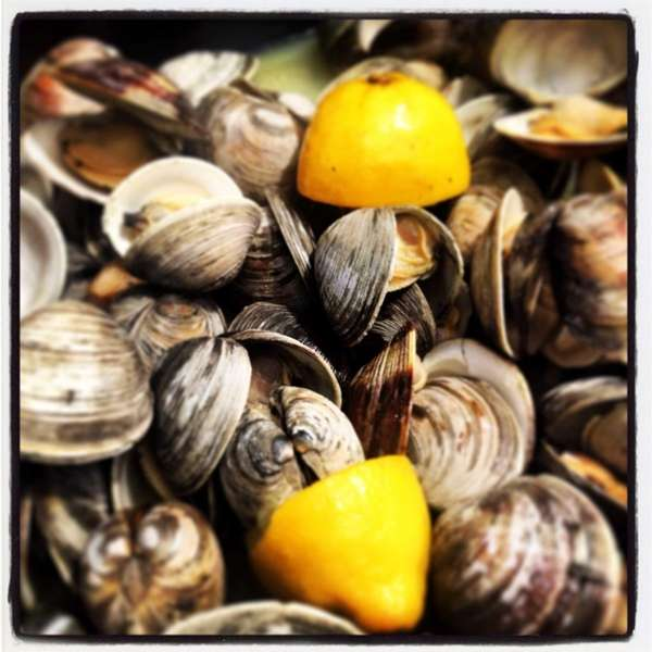 Steamed clams with garlic & oil, white wine
