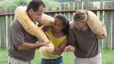 An albino Burmese python at Safari Off Road