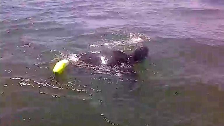 A DEC video shows the Boston Whaler patrol