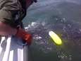 A leatherback sea turtle got a lucky assist