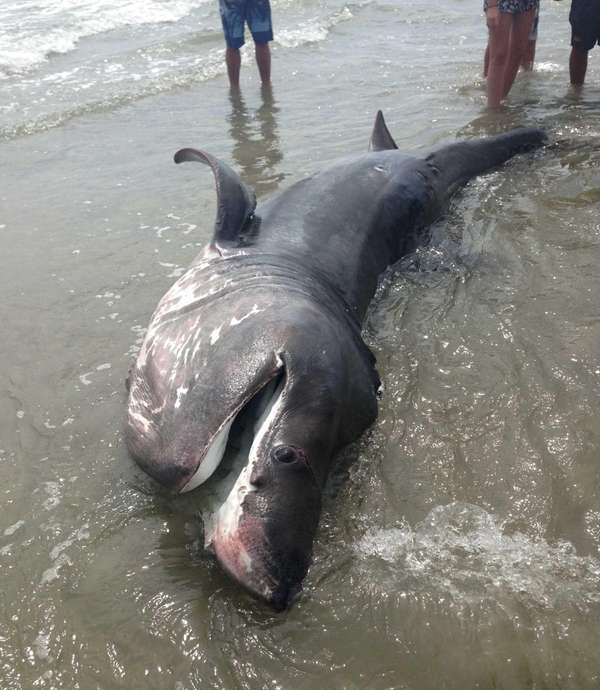 A shark washed ashore at the New York