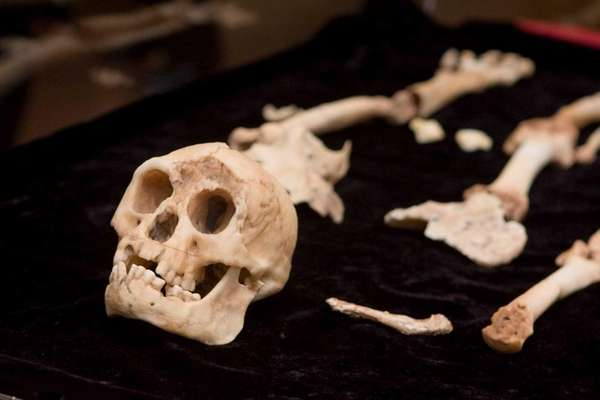 Since its announcement in 2004, Homo floresiensis has