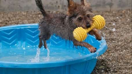 Howey, a one-year-old Terrier mix, keeps its cool