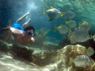 Rocco Odell, 14, of Bayside, swims with exotic