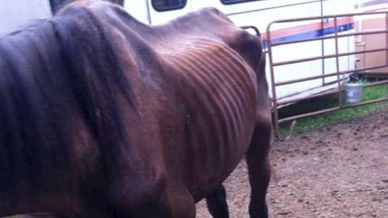 Two horses were rescued in Center Moriches after