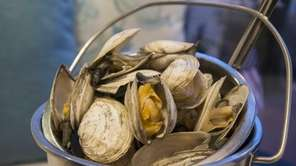 Soft-shell clams need only be steamed, hence their