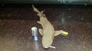 A dead shark was found on the Queens-bound