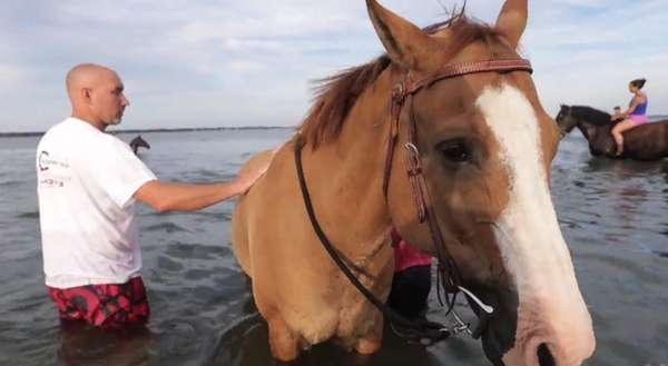Residents in Southold routinely go to Cedar Beach to relax and ride their horses in the water. Videojournalist: Randee Dadonna (Aug. 9, 2013)