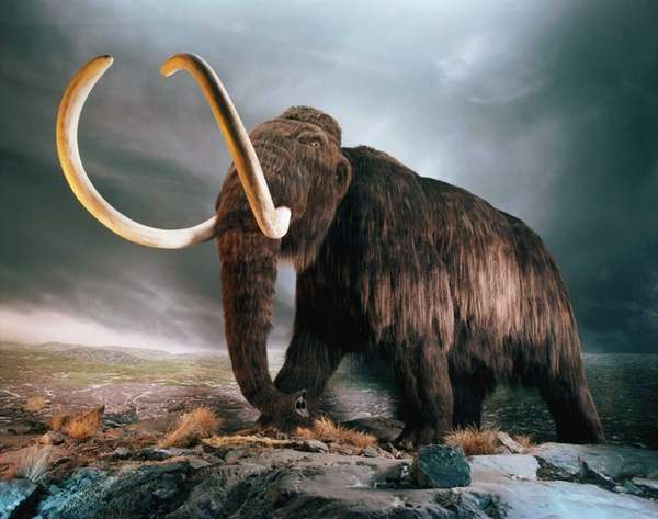 Replica of a woolly mammoth on display at