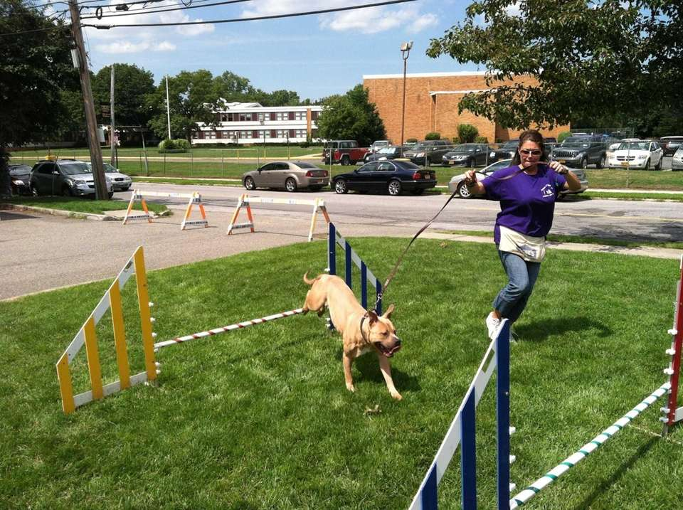 Volunteer trainer Kyrstin Stehle leads pitbull mix Duarde