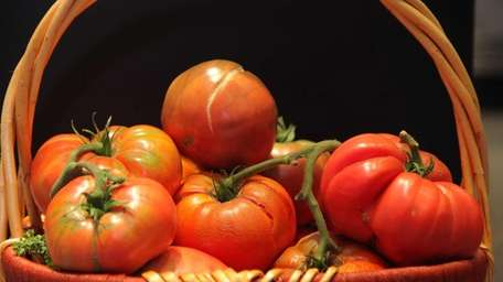 Contenders at the 2013 Great Long Island Tomato