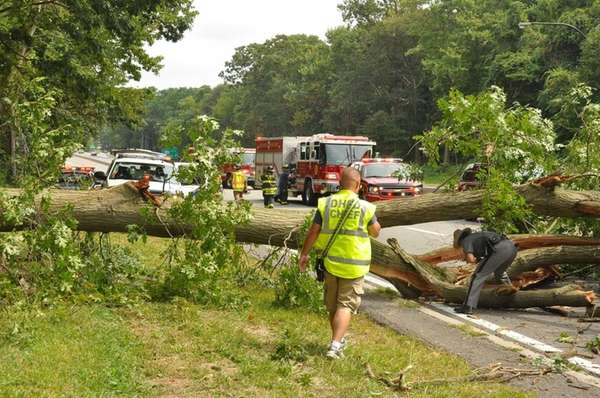Emergency personnel respond after a tree fell in