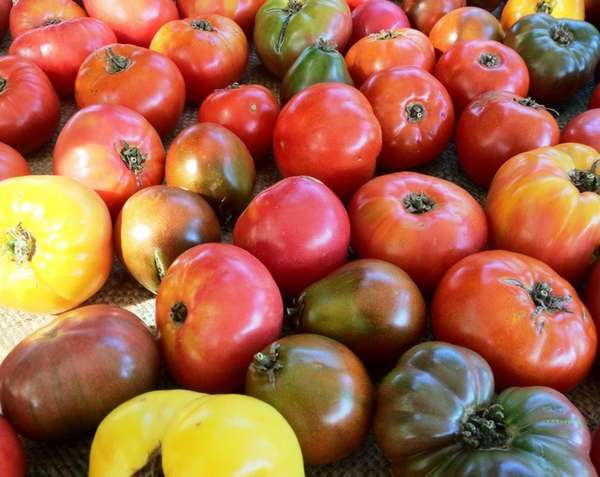 At The Farm in Southold, K.K. Haspel grows