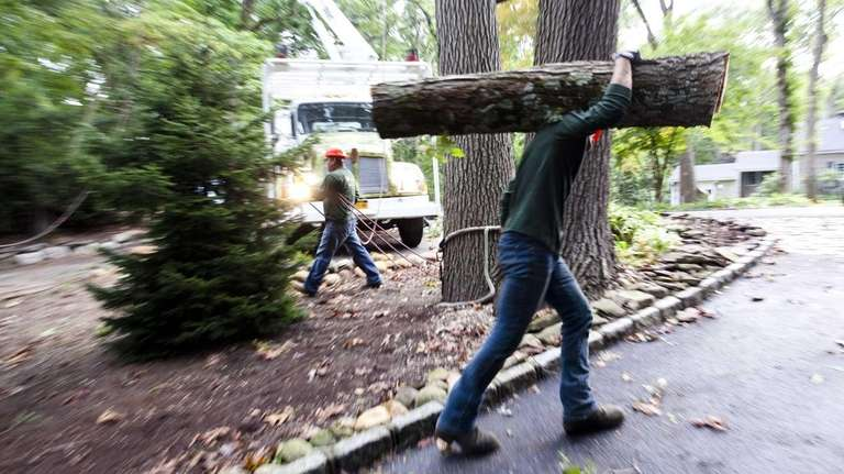 A homeowner hires Colgan Tree and Landscape Service,