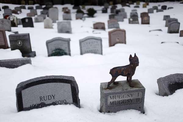 Headstones marking the graves of pets are spread