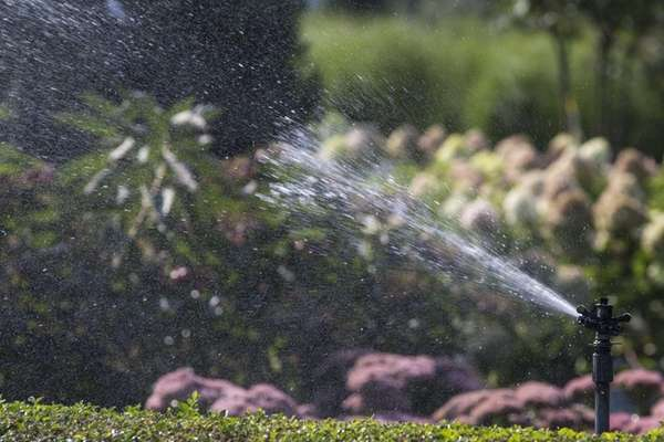 Water is sprayed on shrubs in Water Mill.