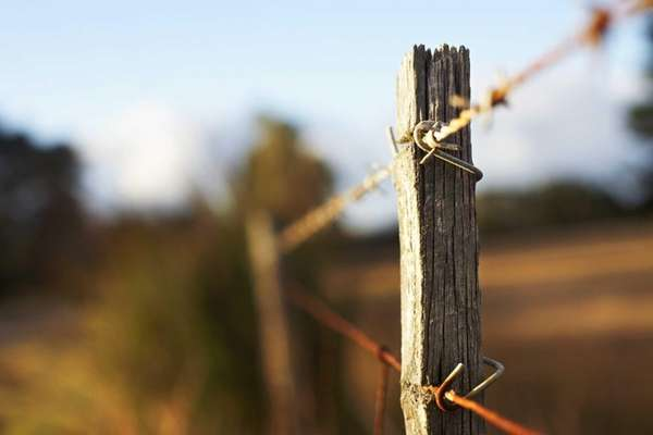 C1VFARM23 - Barbed wire fence on a farm