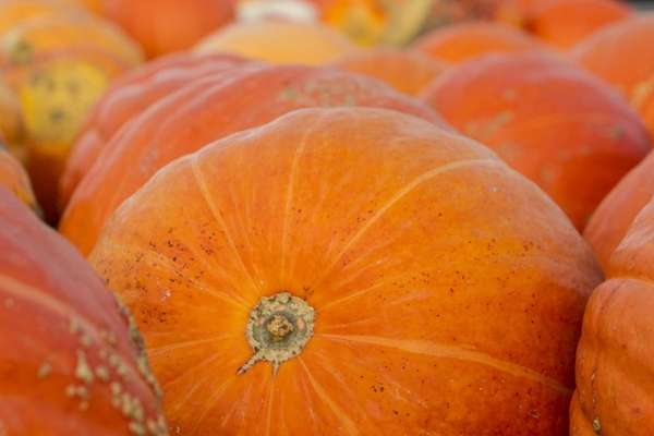 This 2012 file photo shows pumpkins at Rottkamp's